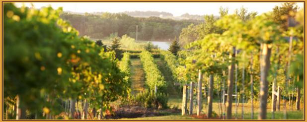 Wineries near owatonna mn